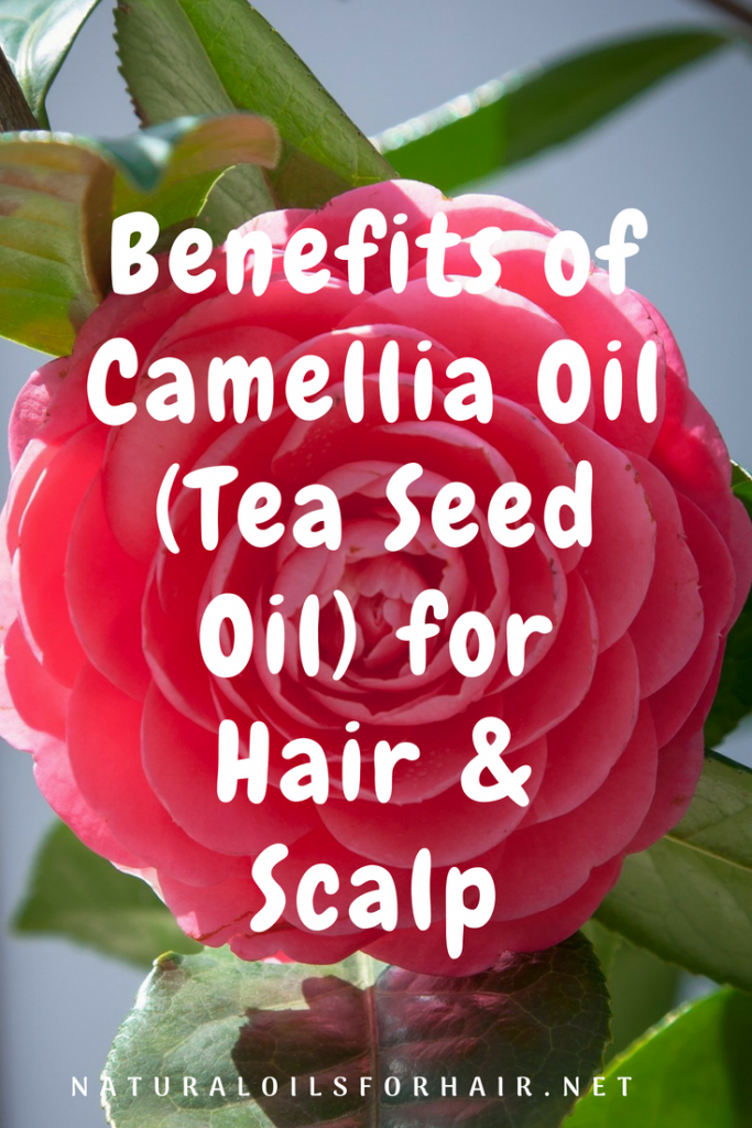 Benefits of Camellia Oil (Tea Seed Oil) for Hair ana Scalp