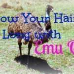Grow Your Hair Long with Emu Oil
