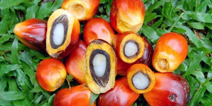 red palm oil for hair