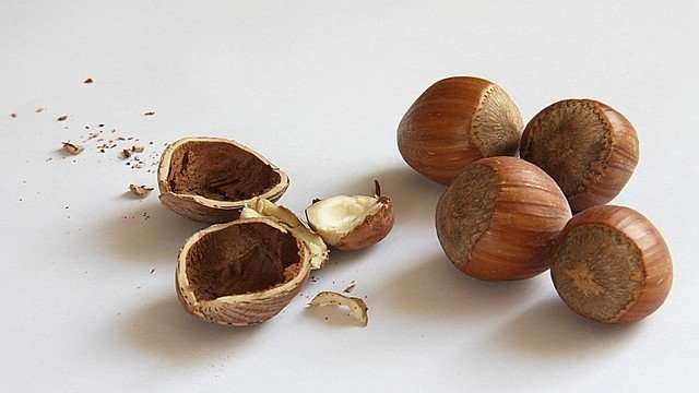 ripe hazelnuts
