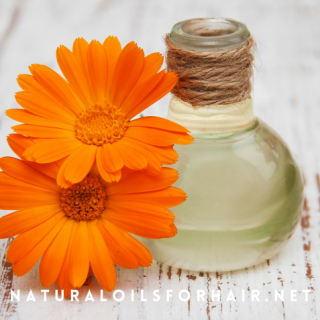 How to use calendula oil for scalo issues