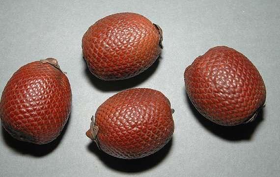 buriti-oil-palm-kernel