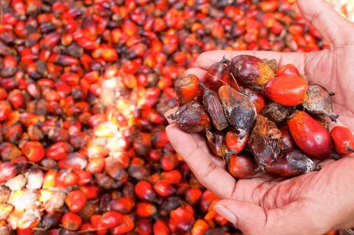 Lower Cholesterol with red palm oil