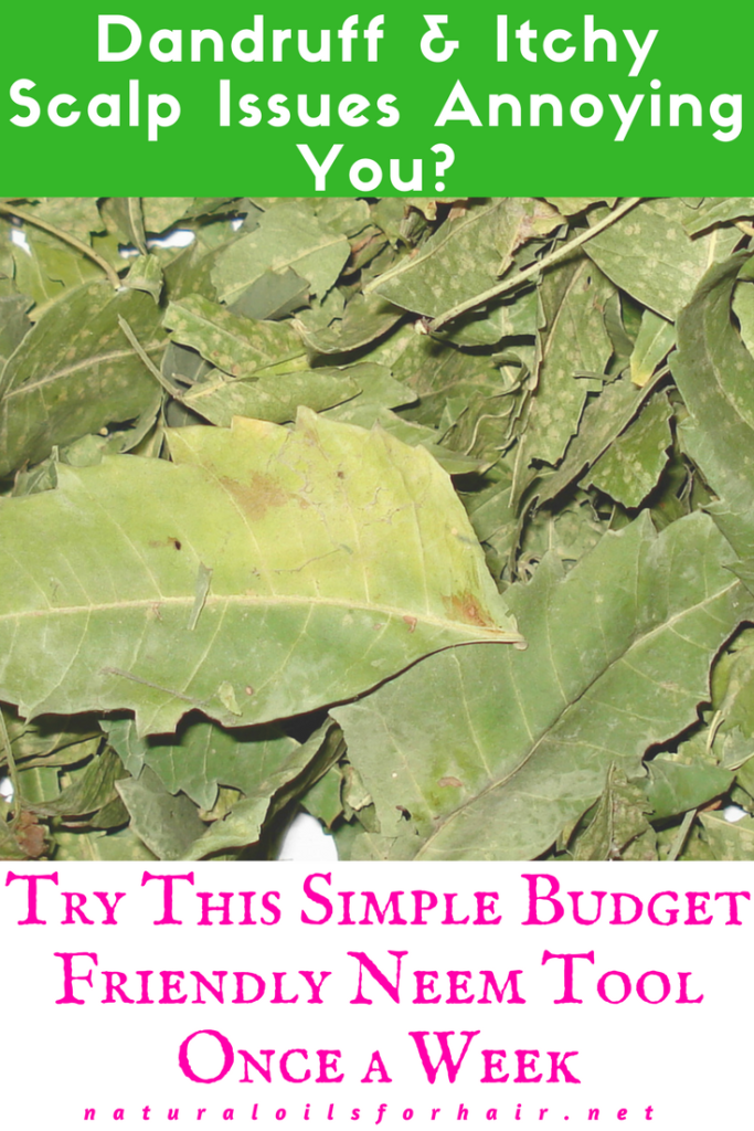 Dandruff and Itchy Scalp Issues Annoying You, try this simple budget friendly tool made out of Neem