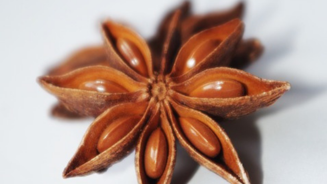 star anise essential oil benefits and how to use star anise essential oil