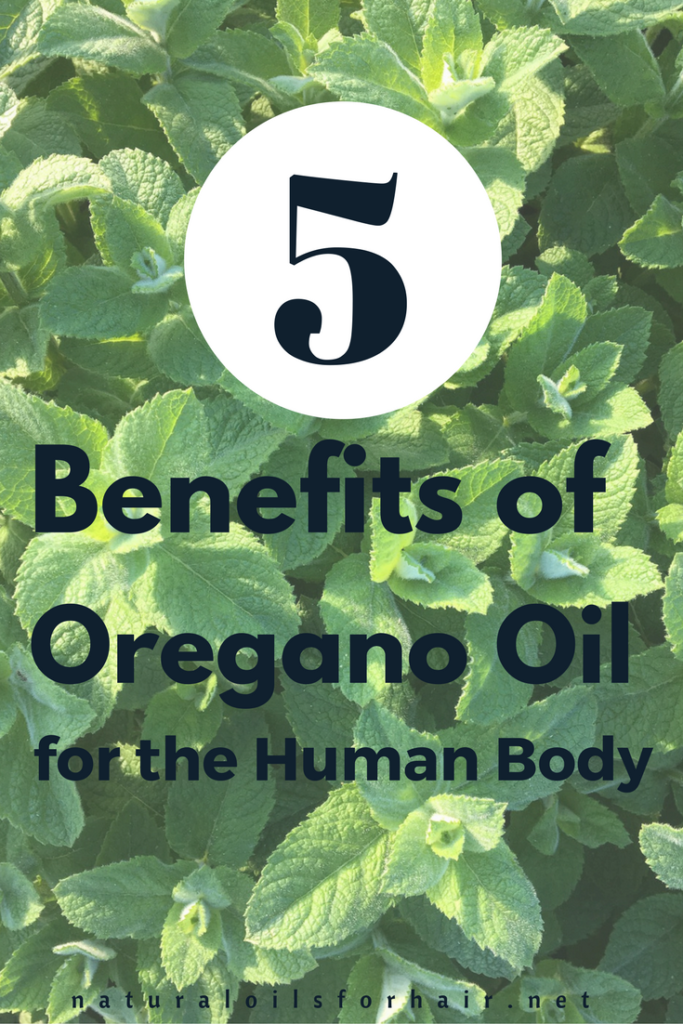 5 Benefits of Oregano Oil for the Human Body