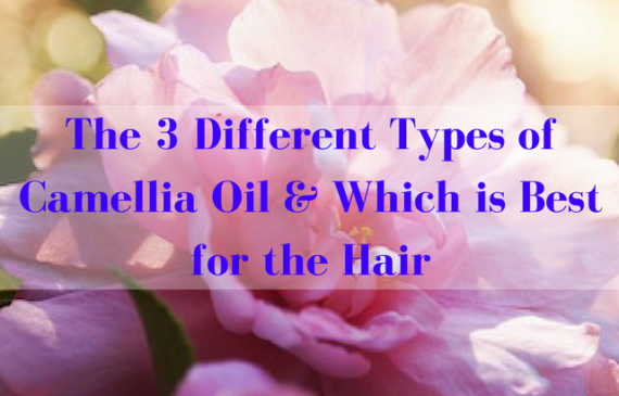 different-types-of-camellia-oil-and-best-type-of-camelia-oil