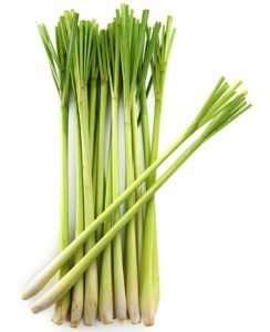 lemon-grass-stalks
