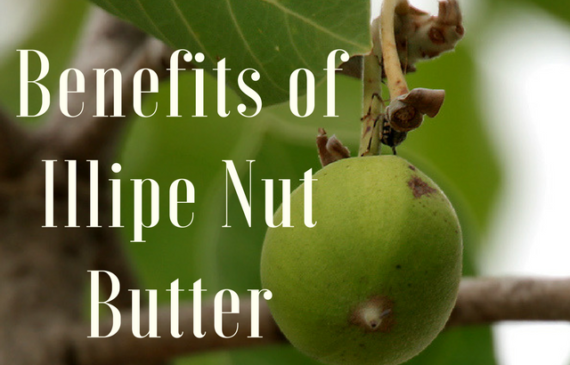 Benefits of Illipe Butter for Hair and Skin