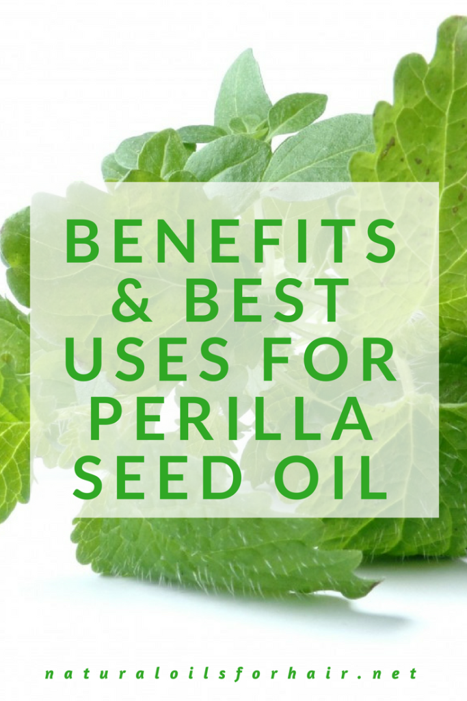 Benefits and Best Uses for Perilla Oil