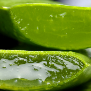 DIY Aloe Vera Juice and Coconut Oil Recipe for Dry Hair