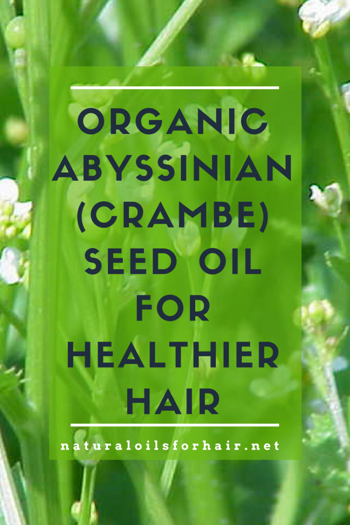 Organic Abyssinian Oil for Healthier Hair