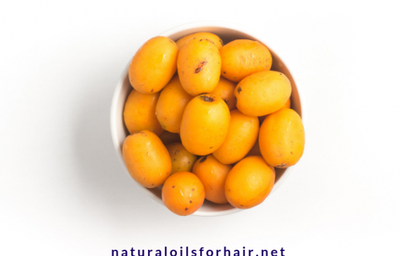 what-is-ximenia-oil-and-benefits-of-ximenia-oil-for-hair